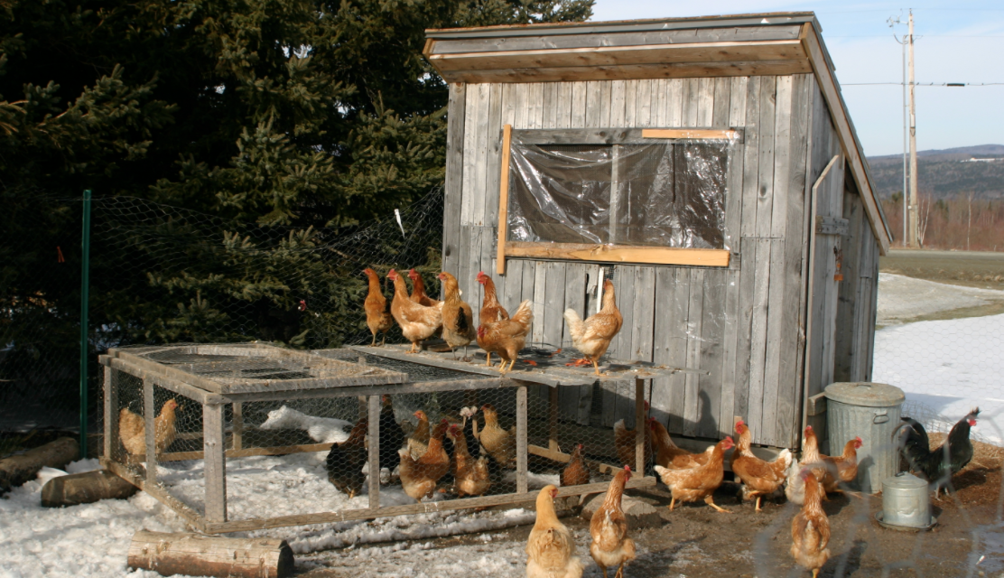 Government is Like a Chicken Coop