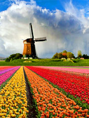 Netherlands (Fall 2017)